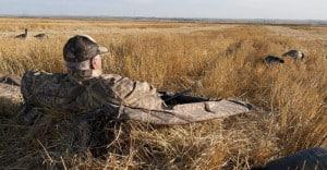 Hunting Geese