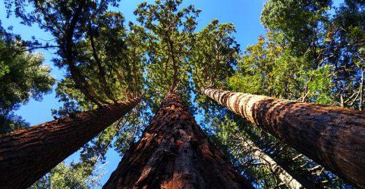 grove-near-auburn