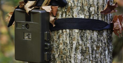 Best Trail & Game Cameras For Hunting