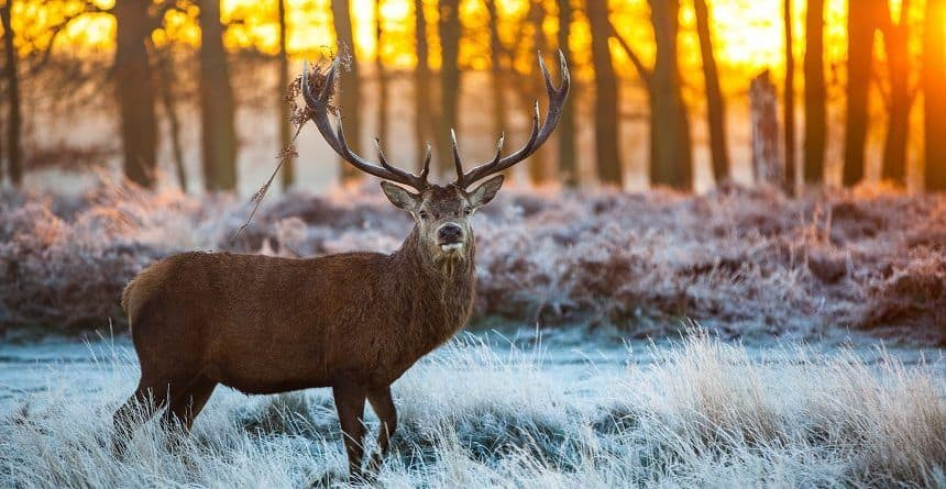 Where to Shoot a Deer with Bows or Rifles