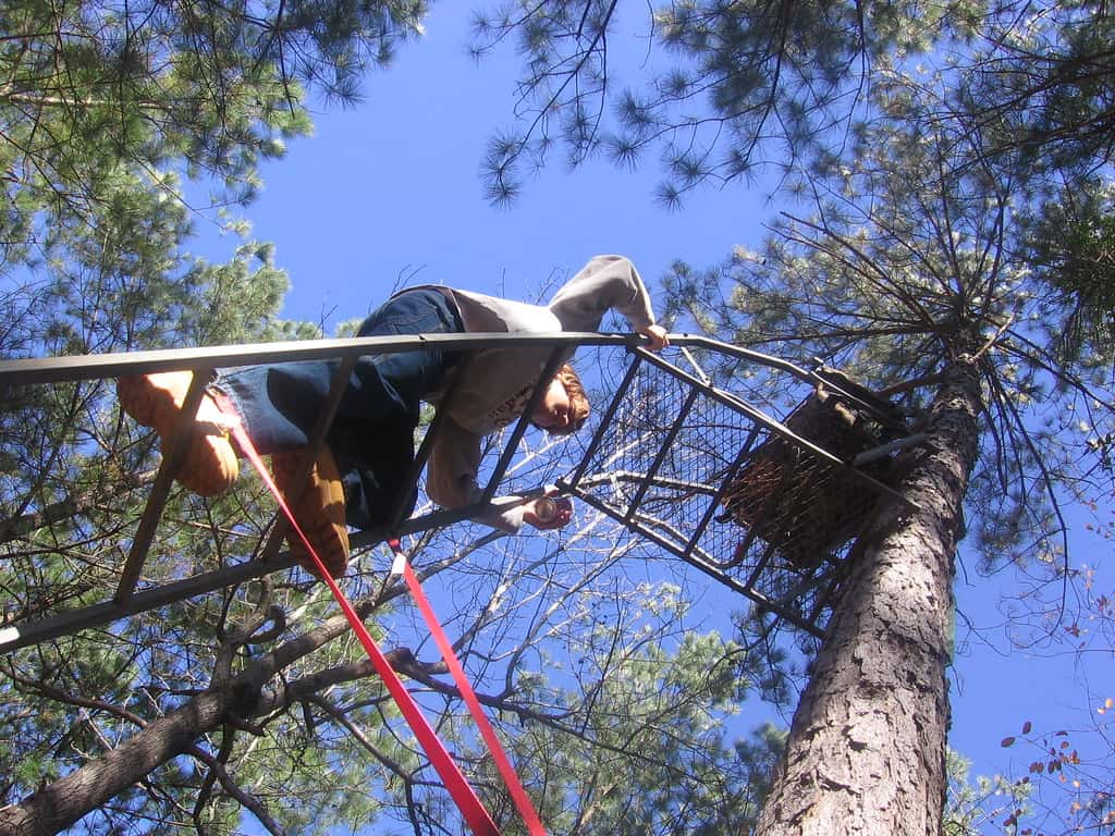 climbing the tree stand