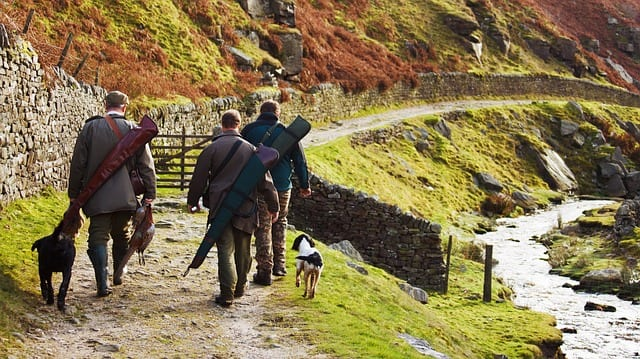 animal-bird-catch-dog-field-gear