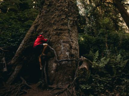 man climbing on tree
